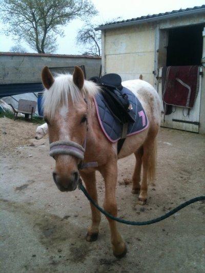 Samedi 26 mars 2011 Première fois avec une selle sur le dos