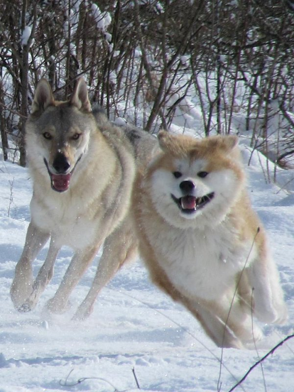 Fendji    et  Kenshin