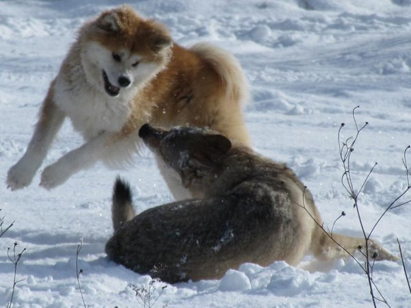 A.I.  v.s.  C.L.T.  :  Fendji vs Kenshin - 4