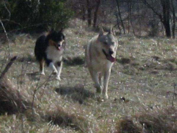 Kenshin  &  Jiwa