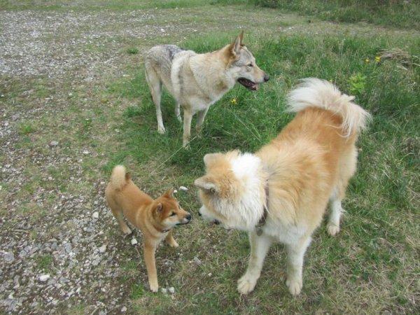 Fenji, Kistune et Kenshin