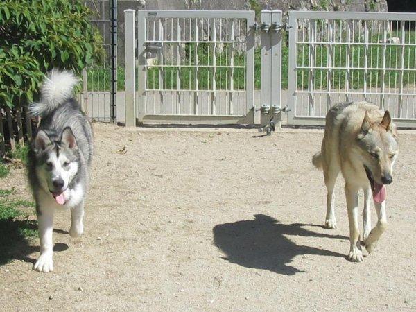 Kenshin & Jarko - 2