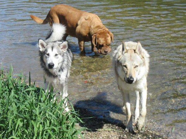 Kenshin, Jarko & Diamine