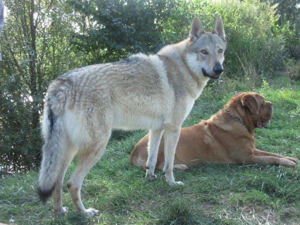 Kenshin  &  Diamine
