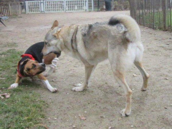 C.L.T  &  Beagle