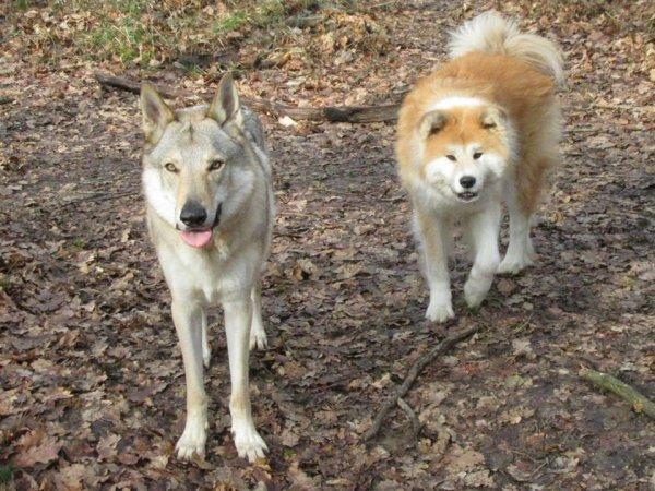 Kenshin  &  Fendji
