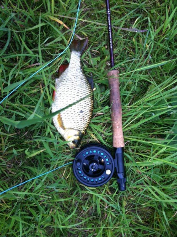 Les 1ers fly fish de la saison