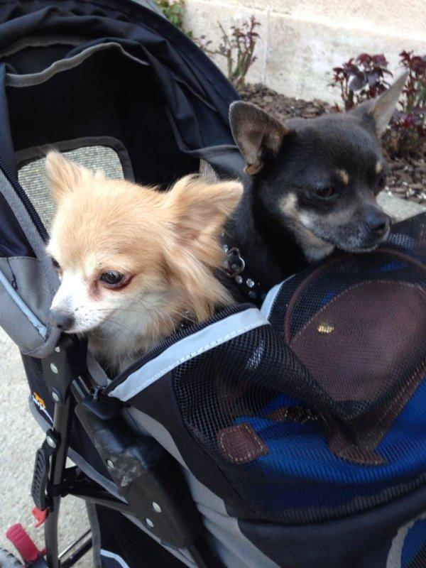 Mes bébés dans leur poussette, bishe bishe.♥♥