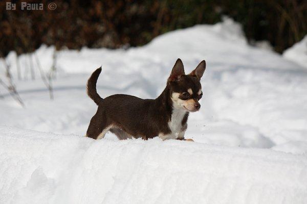 Heaven dans la neige !