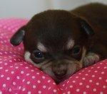 Blog de Passion--Chihuahua