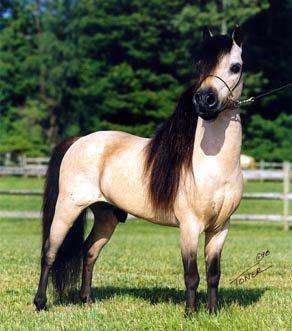 Assez Blog de Race---hOrses - Les chevaux du Monde - Skyrock.com FS88