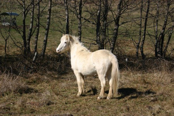 Equitation #1