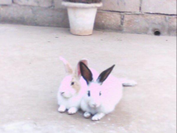 mes lapins d'amur!!