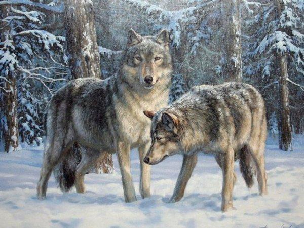 pour mes petits loups!!!!!!!!!!