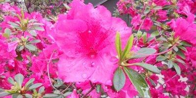 les Fleurs, ma plus grande passion depuis l'enfance