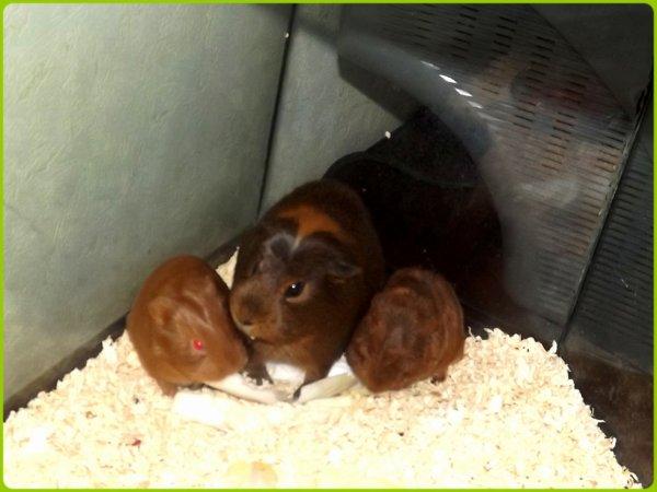 Crunch, Aiele & Chelsea