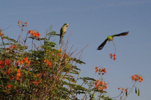 Le pantanal