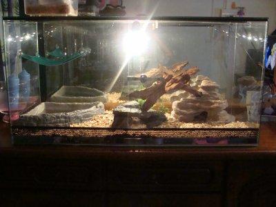 voila la deco de mon petie terrarium en ver pour resevoir mon couple de jeune pogona clasique