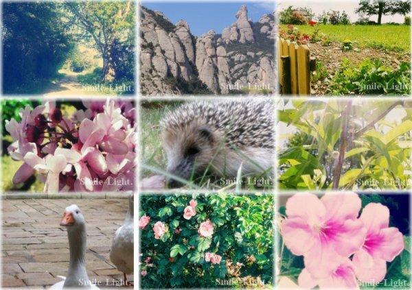 ☼ 9 photographies sur le thème de la nature ☼