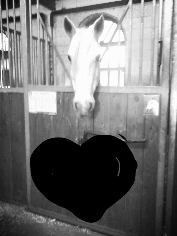 Mon amour de poney ,je t'aime .