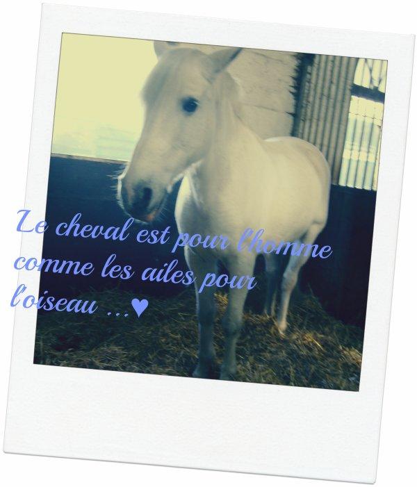 Le poney parfait ♥♥∞