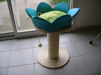 arbre chat koala forever. Black Bedroom Furniture Sets. Home Design Ideas