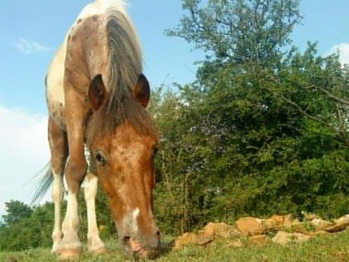 Le seul poney à qui mon coeur appartient.