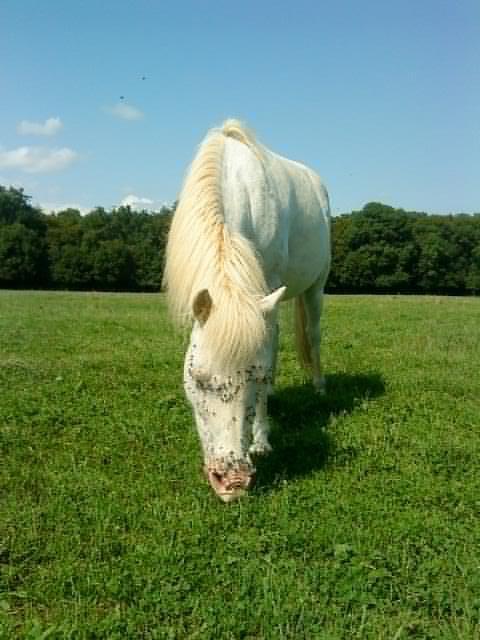 Peut-être un poney, lui aussi a son coup de coeur ;)