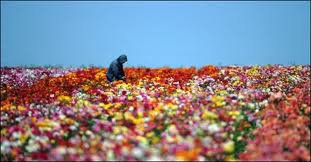 notre amour est solide grâce a ces fleurs :( ... souvenir