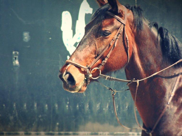 """"""" L'air du paradis est celui qui souffle entre les oreilles d'un cheval. """" Proverbe Arabe"""