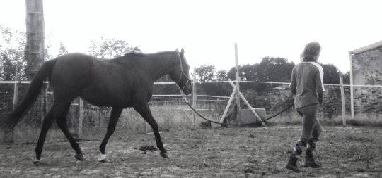 Le cheval n'est pas un simple animal C' une Oeuvre d'Art