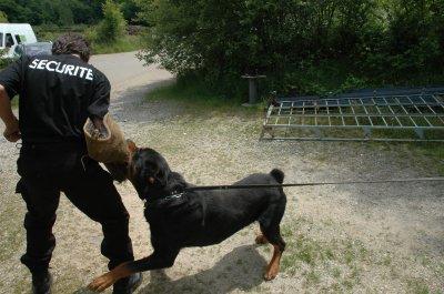 zen entreprise sécurité gardiennage  n°1 en   France portable 06 85 25 47 16