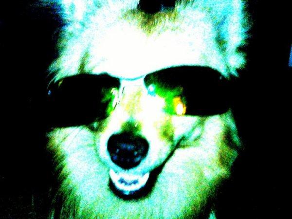 Mon ptit chien