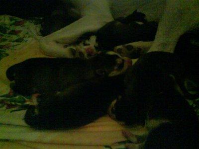 Shana et ses 10 bébés !!!