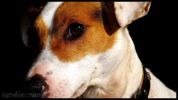 """Mon chien """"Flamby"""""""