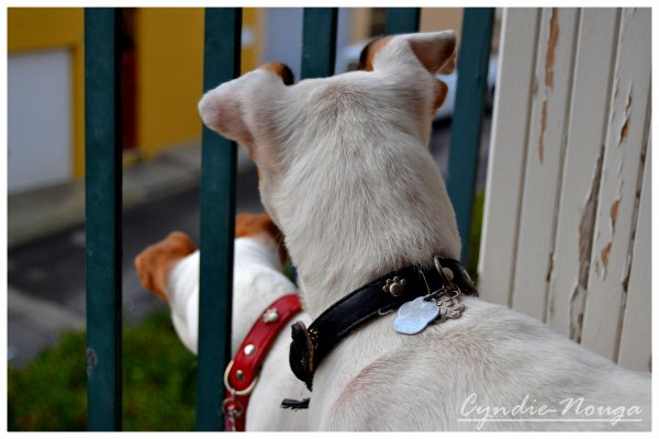 Mes chiens, les curieux du quartier...