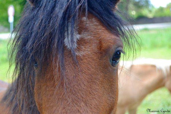 Des chevaux...