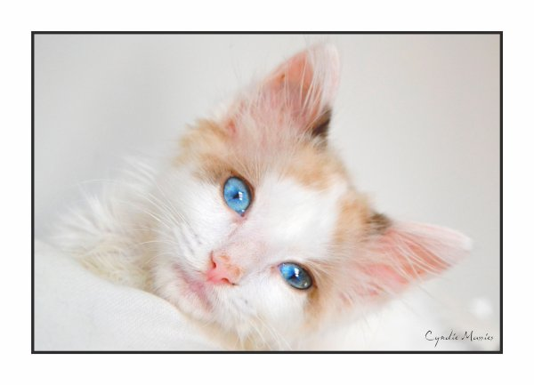 Bébé-chat