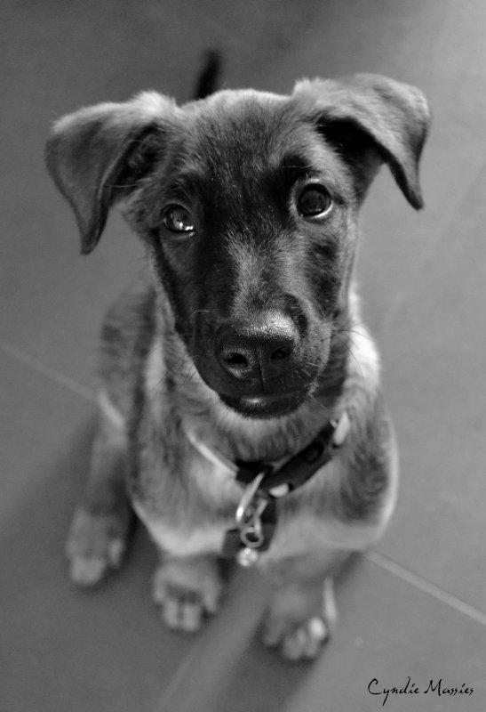 Habsynthe, notre nouvelle chienne