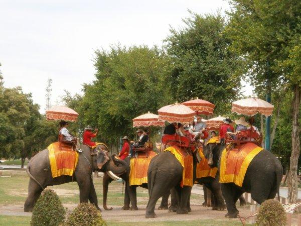 Les chiens en Belgique, les elephants en Thailande