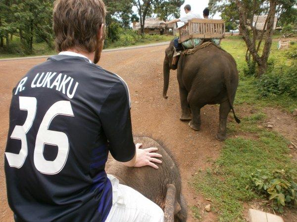 Plateau des Boloven: Promenade avec les elephants