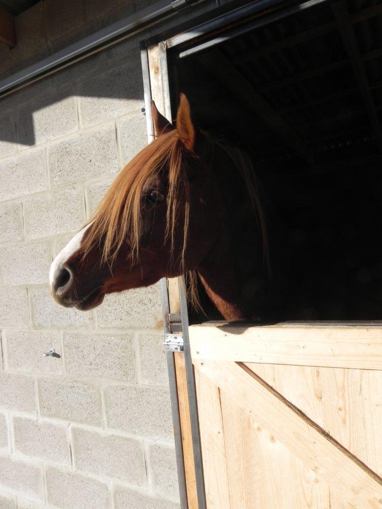 On castre les chevaux pour avoir des chevaux plus faciles ...FAUX !