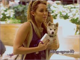 Miley Cyrus a l'aéroport de lax avec un nouveau chien !