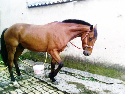 Pablo de Thierre, L'amour que je lui donne il me le rend en retour, il a vraiment un c½ur se cheval il a le mérite d'être aimer .