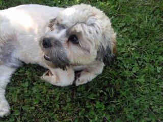 le chien de ma grand -mere