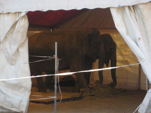 Cirque Pinder Pelouse de Reuilly 2012