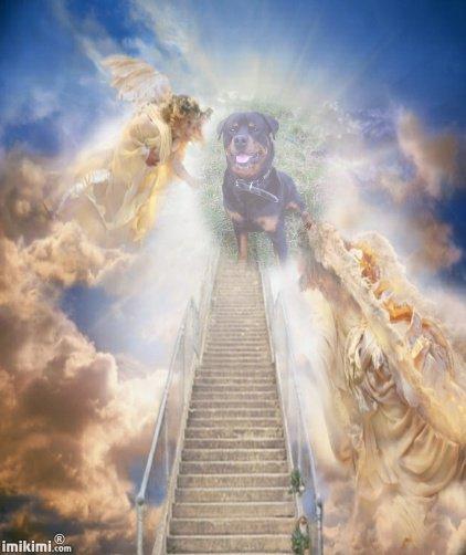 Paco tu me manque je t'aimerez toute ma vie...Mon ange repose en paix...