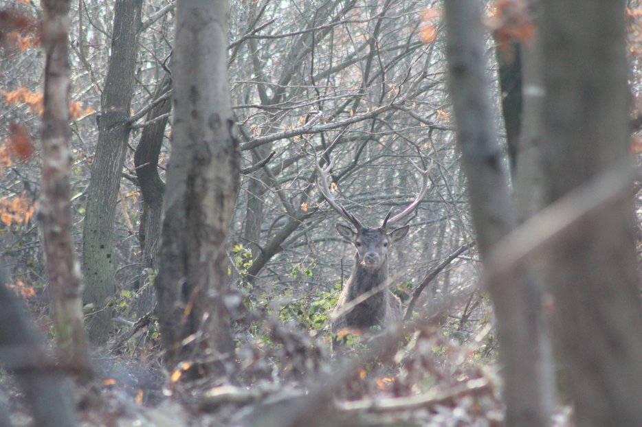 Blog de cerf-animaux02