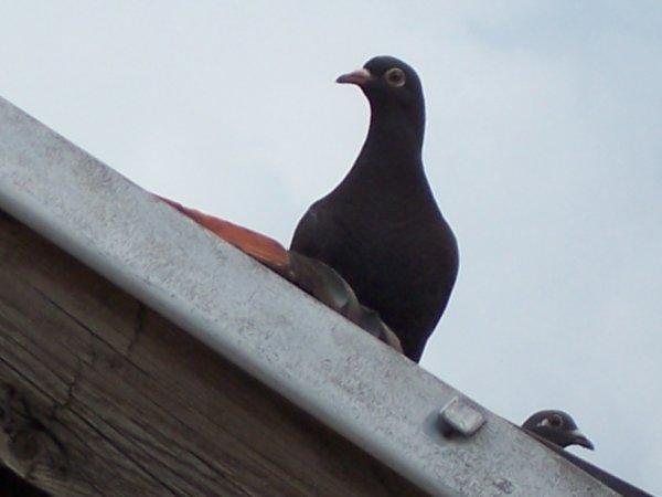 Black surnommé le corbeau!