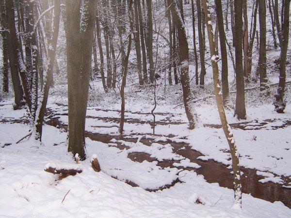 Forêt Hivernale!